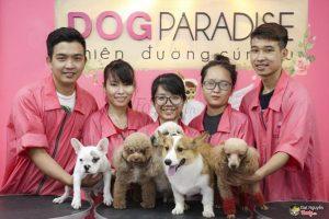 Dogparadise - Địa chỉ chuyên cắt tỉa lông chó mèo chuyên nghiệp tại TPHCM